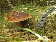 ŠMERDOVI Z BANÍNA najdou pokaždé v lese spoustu hub. Jedlé sbírají, nádherné muchomůrky plní fotoalbum.