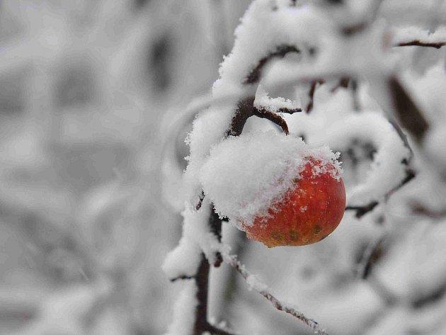 Zima v zahradě.