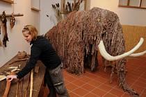 V muzeu v Poličce mají mamuta.