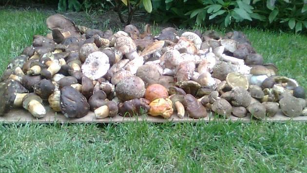 Za dvě hodiny našla hromadu hub v polesí u Květné paní Mlynářová z Poličky.