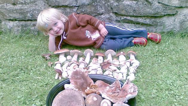 """To je hříbků!  """"Vnučka Julinka pomáhala sbírat houby na  Baldě u Poličky,"""" napsal nám  Josef Podhorný z Bystrého, který zaslal fotografii  krásných hřibů."""