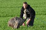 FANDA. Tak se jmenuje pštros emu, který se prošel z Lazinova až do Banína. Chovatelka ho lákala na rohlíky.