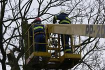 Hasiči museli zklikvidovat poškozené větvě u základní školy v Javorníku.