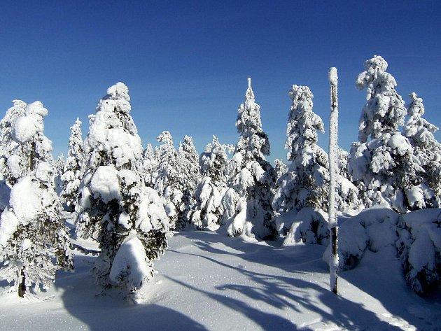 Bílý sníh, modré nebe, zlaté slunce. Ideální počasí na běžky.