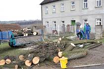 Zdravé stromy?  Možná bylo jen otázkou času, kdy přijde silný vítr a nemocné lípy spadnou a někoho zraní.