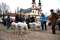 Pavel Lněnička se svými samojedy  vozil při vernisáži  výstavy v muzeu v Litomyšli děti na  speciálním  vozíku.