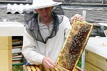 Včelaři v současné době kontrolují stavy včelstev. Než vytočí první litry medu, bude to několik týdnů trvat. Kolik medu letos včely vyprodukují, nikdo nedokáže odhadnout. Rozhodne jaro.