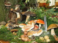 Výstava hub myklologického klubu v Litomyšli na Veselce