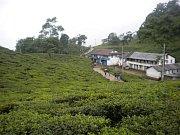 Naše ubytovna uprostřed čajových plantáží.