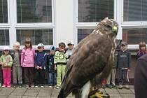 Děti v mateřské školce M. Majerové navštívili dravci a lovecký pes