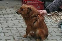 Úřad pro zastupování státu ve věcech majetkových ve Svitavách zajistil nový domov pro dalšího psa z kauzy Mladějov na Moravě.