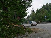 Spadlé větve v Litomyšli