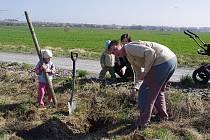 V Poličce obyvatelé vysadili nové stromořadí.