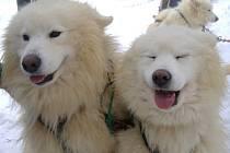Závody psích spřežení. Pohár Lady Brigith Magadan 2009.