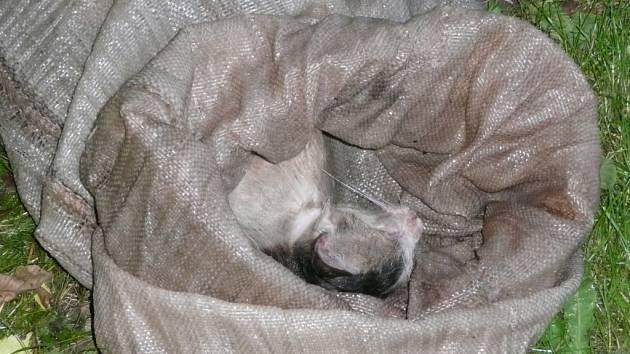 Mrtvá kočka byla nalezena v pytli