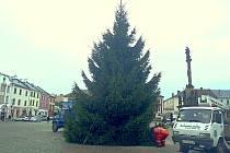 Vánoční strom na moravskotřebovské náměstí dorazil ze sousední Kunčiny