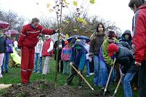Žáci a učitelé vysázeli tři platany na hřišti Wembley.