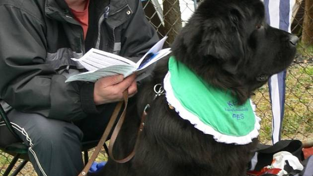 O víkendu se sjeli do rekračního areálu Srncí u Moravské Třebové zástupci novofunladských psů.