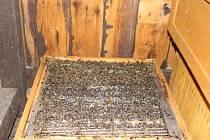 Uhynulé včely