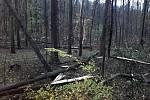 Následkem větru popadaly stromy v Nedošínském háji.