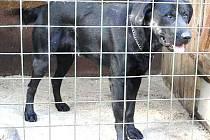 Kříženec většího psa. Stáří asi jeden a půl roku.