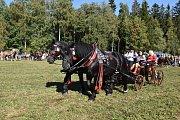 DESÍTKY KONÍ  se předvedly v neděli na jubilejním 20. ročníku Formanského dne v Borové u Poličky.
