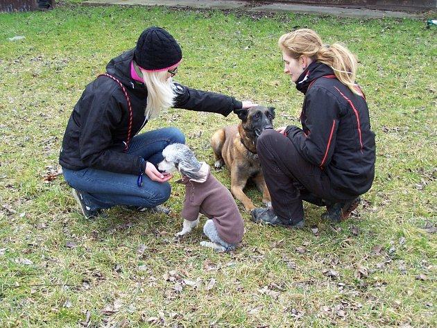 Pomocí klikru se dá odbourat agrese vůči dalšímu psovi. Pudl zpočátku ovčáka odháněl, vrčel na něj a útočil. Ve chvíli, kdy byl pudl klidný, panička klikrem okamžitě označila žádoucí chování a odměnila ho.