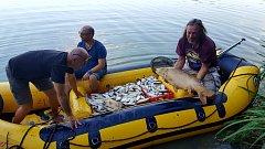 Lovení uhynulých ryb na rybníku Rosnička ve Svitavách.