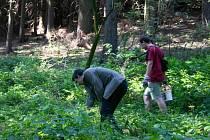 Dobrovolníci z řad veřejnosti pečují o lesy.