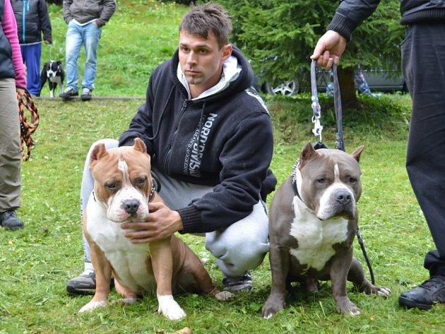 Na sraz buldoků i buldočků se do Hamrů sjelo o víkendu na padesát psů z celé republiky.