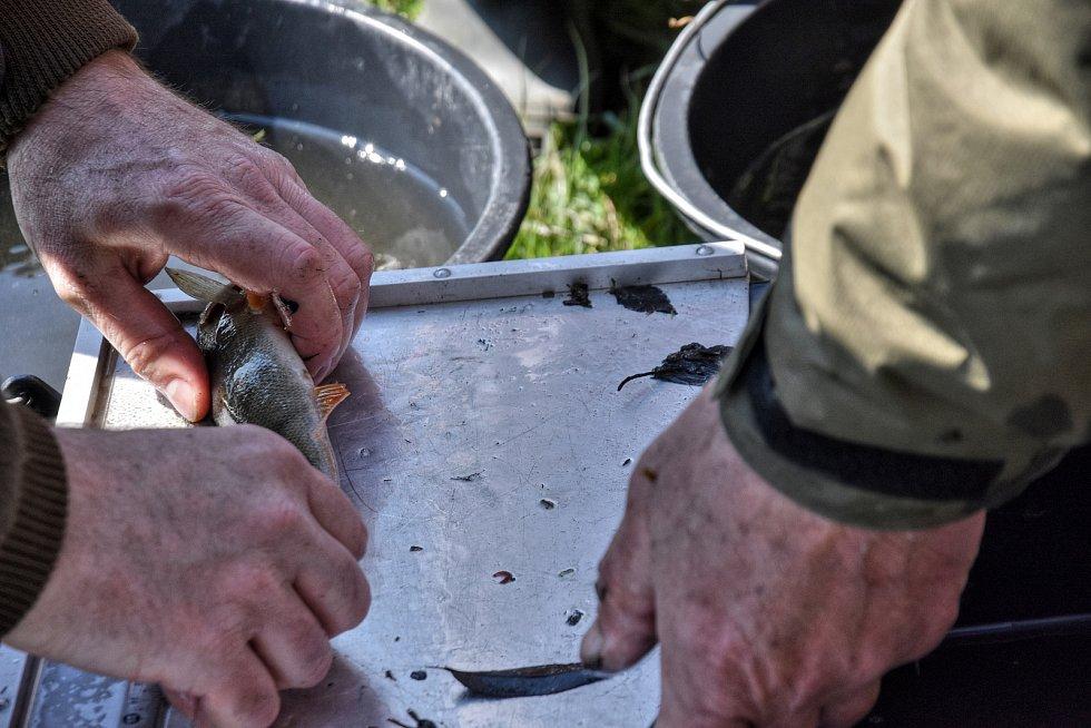 Kontrolní odlov ryb na Rosničce ukáže kvalitu a množství ryb. Odborníci doporučí vhodné druhy.
