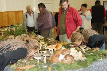 Více než sto sedmdesát druhů hub pohromadě našli v sobotu lidé na výstavě v Litomyšli. Některé voní po kuchyňských surovinách, například houžovec hlemýžďovitý po anýzu.