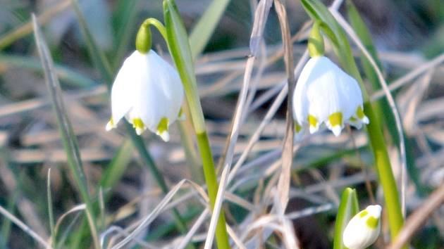 Jaro v únoru.