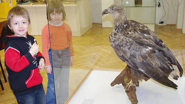 """Do muzea ve Svitavách vlétlo jaro v podobě """"ptačí"""" výstavy."""