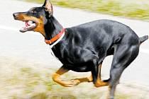 Roste opravdu počet napadených člověka psem, nebo jsou tyto případy jen oproti období před rokem 1989 kvůli médiím více vidět?