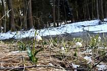 První jarní den v přírodní rezervaci Králova zahrada u Opatova na Svitavsku.