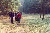 Sněženek je ve Vysokém Lese dostatek. Přesto jsou chráněné,