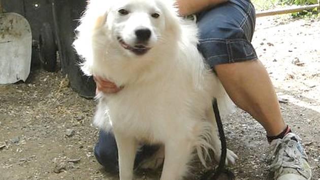 KRÁSNÝ BÍLÝ pes zatím žije v útulku ve Vendolí, ale zasloužil by si pořádný domov a hodného pána.