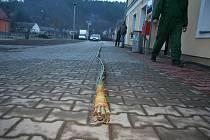 Pletení rekordní pomlázky v Biskupicích. Délka pomlázky je 30 metrů.