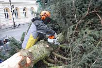 Vánoční strom ze svitavského náměstí ve středu zmizel. Pracovníci technických služeb odstranili větve a pak jej rozřezali na špalky. Dřevem se ohřejí původní majitelé stromu.