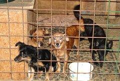 Psi skončili v útulcích v regionu, například ve Vendolí. Pejsci jsou hraví a veselí, avšak zanedbaní.