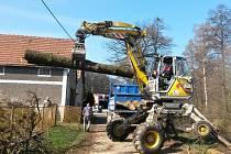 Pily, těžké stroje i lana byly potřeba při kácení stromů v Nedošíně.
