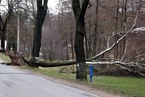 VICHŘICE VYVRACELA stromy. Takto si například poradila s několik desítek let starou břízou v Sádku u Poličky.