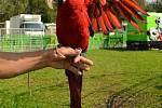 CIRKUS JO-JOO hostuje na svitavské Cihelně.