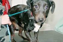 Černý pes nemá ani rok a je ustrašený. Potřeboval by hodného pána, který by ho měl rád.