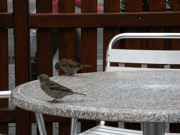 """Vrabci na """"návštěvě."""""""