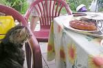 Naše grilování je vždy malým dobrodružstvím. Máme 6 mlsných koček. Jakmile opustí někdo místo u stolu už se tam jedna vloudí a čeká na možnost  něco si odnést.