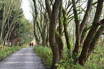 Vodárenský les u Svitav je místem, kam mohou lidé vyrazit na procházky.