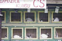 Výstava drobného zvířectva v Poličce.