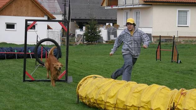 Psi skákali přes parkurové překážky.